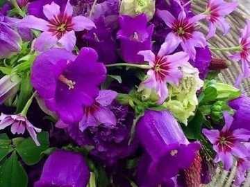 campane viola - campane viola e fiori rosa in un cestino
