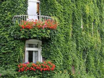 Architettura - casa ricoperta di edera