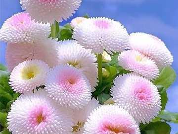 fleurs fraîches - délicates fleurs fraîches - pièces