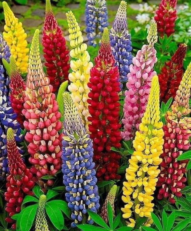 fiore arcobaleno di fiori - arcobaleno di fiori - fiori nel giardino