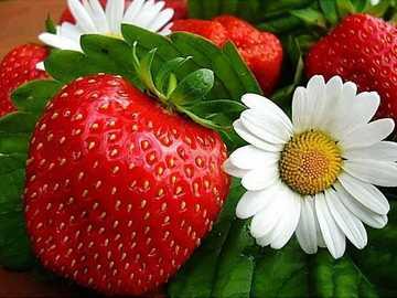 truskawki i stokrotki - duże świeże truskawki i stokrotki