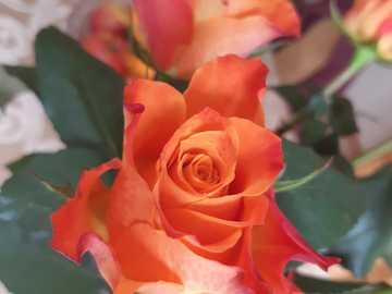 róże z życzeniami - kartka z życzeniami i różami