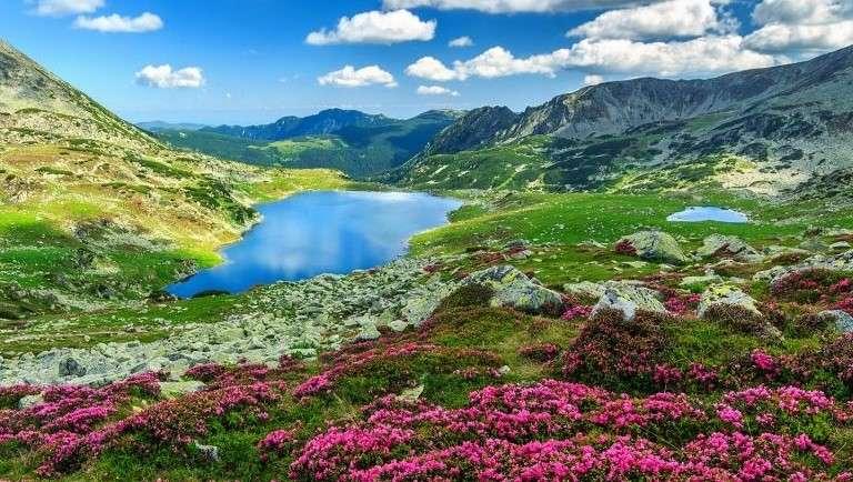Lake In The Mountains, Flowers - Lake in the mountains, Kwiatki. Romania