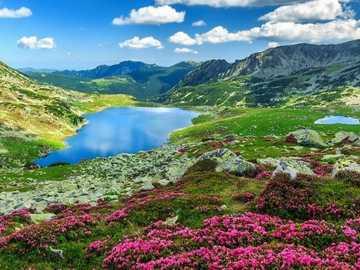 Jezioro W Górach,Kwiatki - Jezioro W Górach, Kwiatki.Rumunia