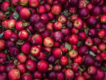 lote de manzana roja - Manzanas Recién Escogidas.