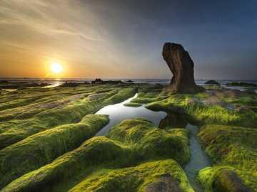 Słońce nad wybrzeżem - wybrzeże - zielone glony ----