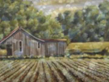 Ranch NENn - paesaggio di campo di cotone