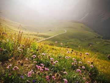 Panorama - path through mountain meadow - fog
