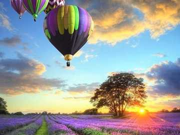 Balloons Over a Lavender Field - Balloons Over a Lavender Field.