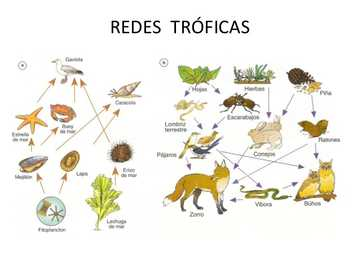 Trophic chain - Animal food chain