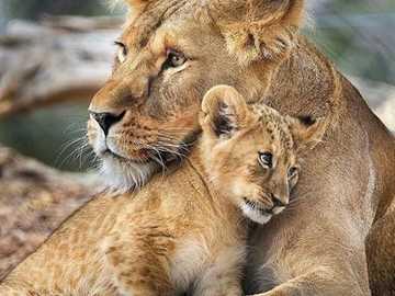 w ramionach mamy - w ramionach mamy - mała pogawędka