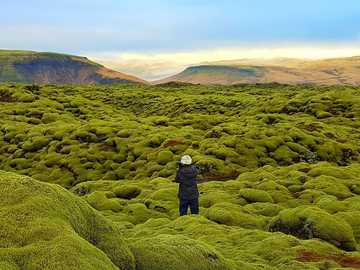 Iceland - Lava fields overgrown with moss