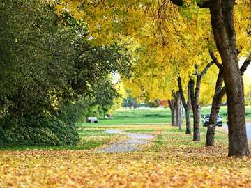 Autumn walk - an alley in the park covered with colorful leaves