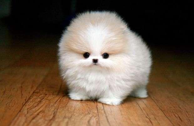animal lindo - el perro más lindo del mundo y del universo (8×5)