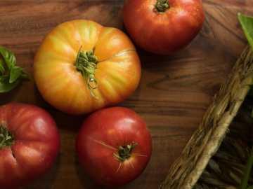 cuatro frutos de tomate rojo y amarillo - tomates reliquia y albahaca fresca sobre una tabla para cortar madera y una cesta de mimbre.