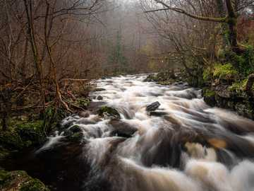 Po deszczu - rzeka i drzewa. Brecon Beacons, Brecon, Wielka Brytania