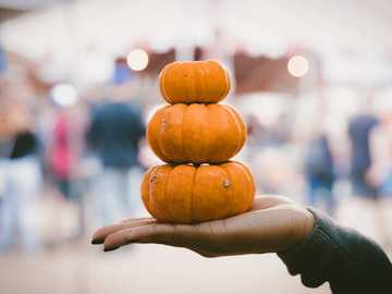 Pumpkin Stack - three pile of pumpkins on person's palm.