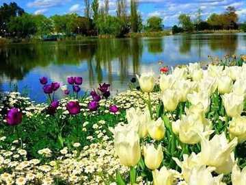 kwiaty nad jeziorem - kwiaty nad jeziorem - krajobraz