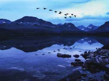ptaki latające nad jeziorem - Gęsi Latają Północ Odzwierciedlenie W Epickim Krajobrazie Jeziora Górskiego. Park Narodowy Glac