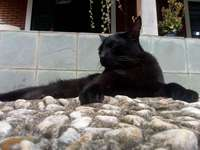 Chat Frederico