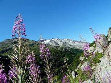mountain panorama - mountains - flowers - meadow ----