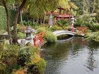 Тропическа градина2