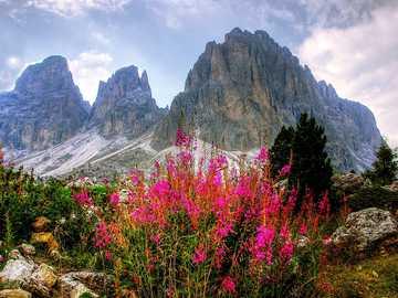 Panorama des Dolomites - montagnes- Alpes - fleurs -----