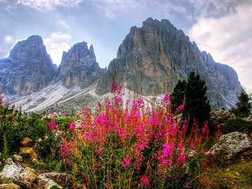 Dolomites panorama - mountains- Alps - flowers -----