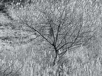 bladerloze boom op grijs veld