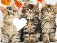3 schattige, dikke kittens