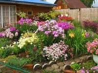 Jardim de flores - jardim de flores - flores frescas