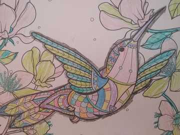 Színes kolibri - A Kolibri madár meglepő szépségével, erejével és sebességével
