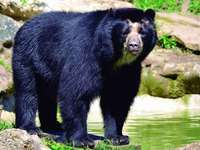 Látványos medve