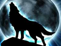 Wolf and moon - A wolf that howls at the moon.