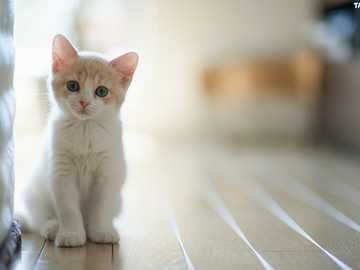 MAŁY BIAŁY KOTEK - Tapeta Mały, Biały, Kotek