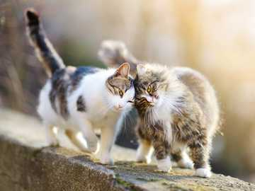 TWO KITTENS. - Two cats or one? Is it true that cats need company?