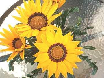 Schöne Blumen - Blumen wie Sonnenblumen auf einem Glastisch