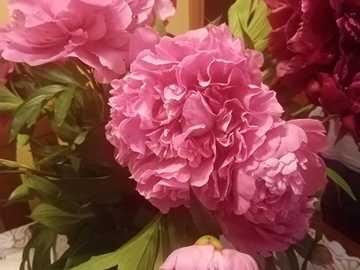 Strauß Pfingstrosen - Vase mit wunderschön blühenden Pfingstrosen