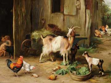 gospodarstwo rolne - zwierzęta w gospodarstwie