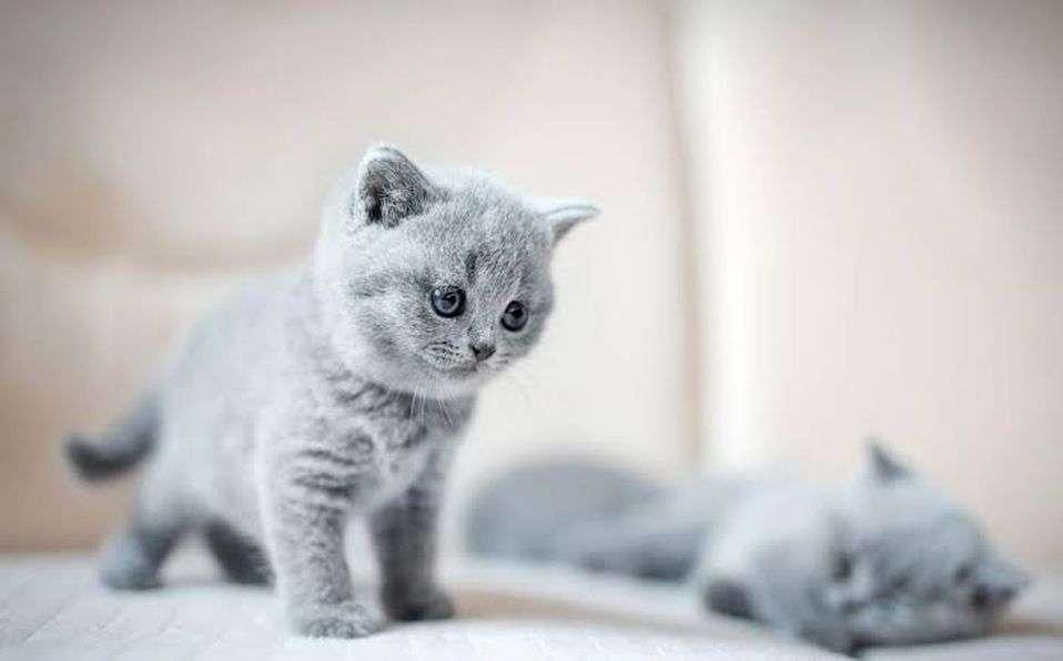 сладка котка - котката е в авитация с повече котенца (15×9)