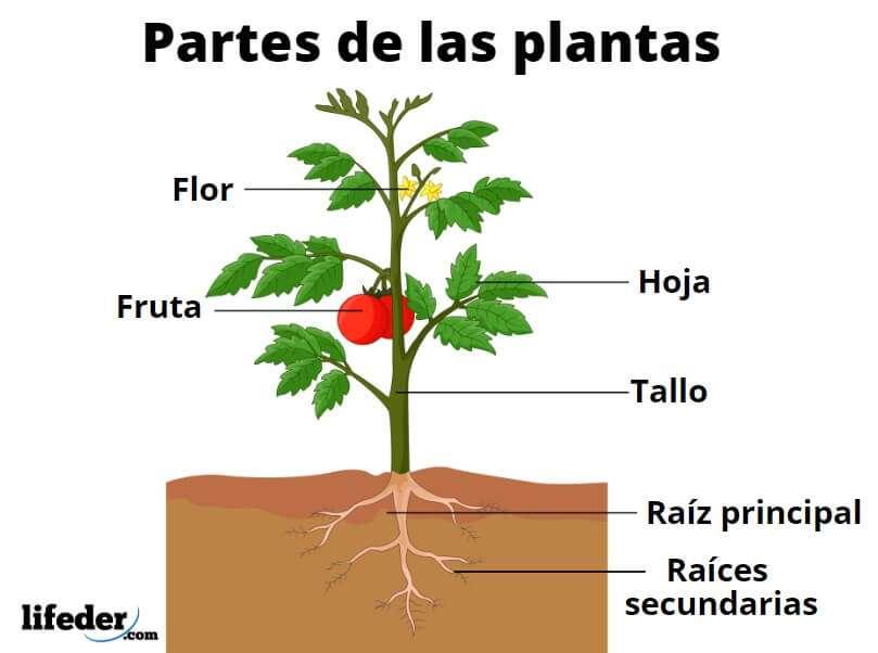 PĂRȚILE PLANTULUI - Părți ale instalației. COMANDĂ PĂRȚILE LA CARE SE SOLICITĂ. Planta este formată din 5 părți (4×3)