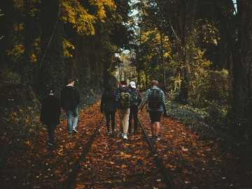 On Track - six person walking on train rail surrounded by tall trees at daytime. Lake Oswego, United States