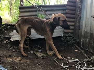 MALTRATTAMENTI - L'abuso di animali è una crisi globale