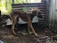 MAUS TRATOS - Abuso de animais uma crise global