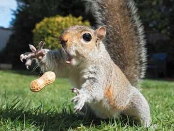 to jest dla mnie - to jest dla mnie - wiewiórka i orzeszek