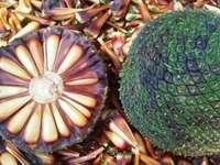 Brasilianische Kiefer - Brasilianische Kiefer, eine essbare Frucht