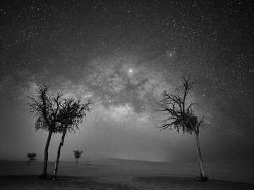 wysokie drzewa na polu - Magia między drzewami .... Al Razeen - Abu Zabi - Zjednoczone Emiraty Arabskie