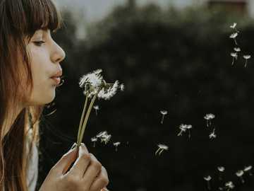 γυναίκα φυσώντας πικραλίδες - Οι σπόροι πετούν σαν ψίθυρος και διηγούνται ιστορίες.