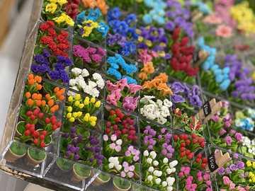 Voller hübscher Blumen - Voller hübscher kleiner Blumen