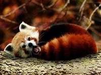 Панда червена :)